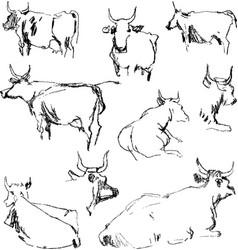 Sketches cows vector