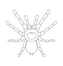 Tarantula spider Brachypelma smithi spider female vector