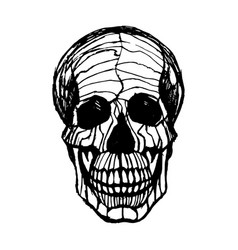 detailed hand-drawn of skull grunge vector image