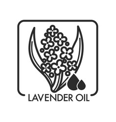 Lavender oil drops and flower plant graphic art vector