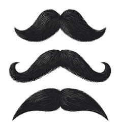realistic moustaches black mustache facial hair vector image