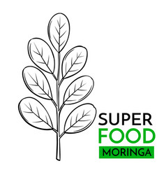 Icon superfood moringa vector