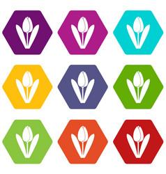tulip icon set color hexahedron vector image