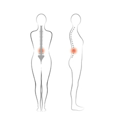 woman body shape vertebrae pain vector image