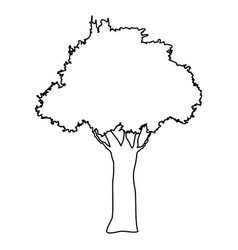 tree natural forest banch foliage image vector image vector image