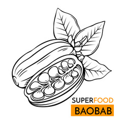 Icon superfood baobab vector