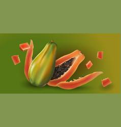 Papaya on green background vector