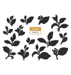 set branch silhouette vector image