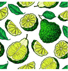 bergamot seamless pattern drawing vector image