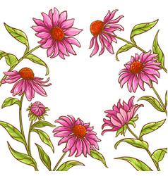 echinace purpurea frame vector image