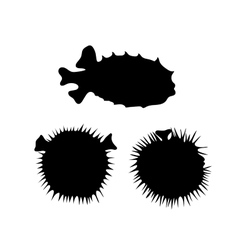Fish hedgehog silhouettes vector image