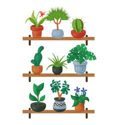 house flowers shelf indoor floriculture vector image