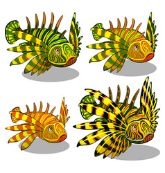 the set of stages of a growing red lionfish or vector image
