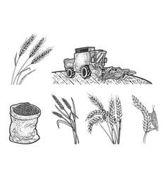 wheat harvest set line art sketch vector image