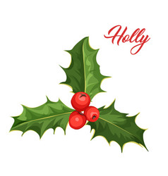 christmas holly mistletoe ilex leaves vector image