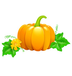 Pumpkin with flower and leaves vector