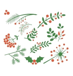 Red Berries Fir and Leaves vector