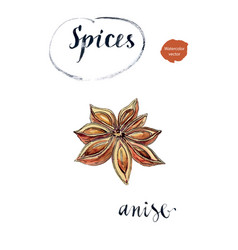 Star anise spice fruit and seeds vector