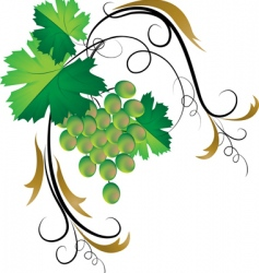 decorative grapevine vector image