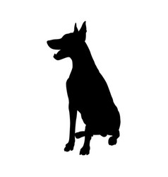 Doberman pinscher dog silhouette vector