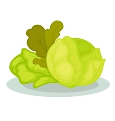 Green vegetables salad and cabbage vector image
