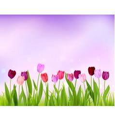 Sky tulip spring banner vector