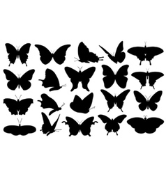 butterfly collage vector image vector image