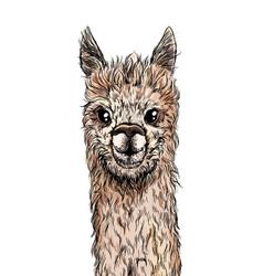 cute alpaca portrait full color sketch vector image