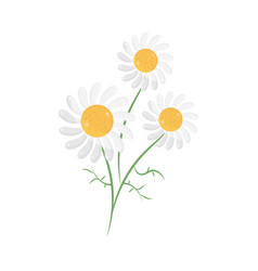 Flowers chamomile nature vector
