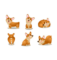 friendly brown corgi dogs in different poses vector image