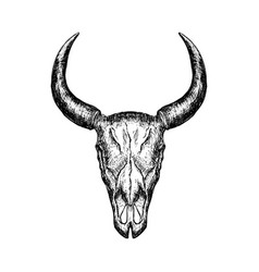 hand-drawn buffalo skull isolated on white vector image