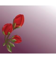 Realistic Geranium flower vector image