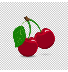 Ripe red cherry berries with leaves vector