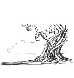 sketch of old trees vector image
