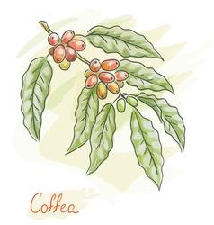 twig of coffea vector image vector image