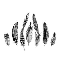 7 hand drawn feathers on white background vector image