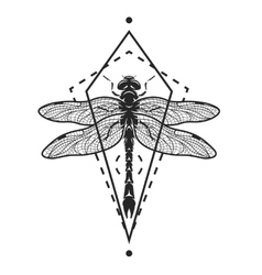 Dragonfly and geometric elements vector