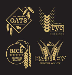 Gold organic wheat grain farming agriculture vector