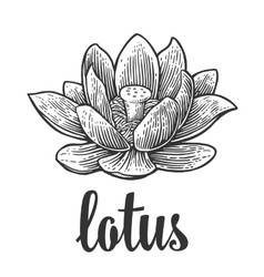 Lotus flower black engraving vintage vector