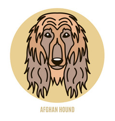 Portrait afghan hound vector