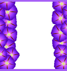 Purple morning glory flower border vector