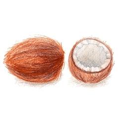 Realistic coconut drawn by color pencils vector