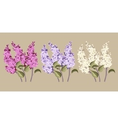 Set of lilac vector