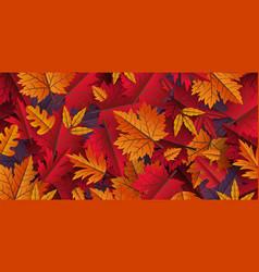 autumn leaves background design vector image
