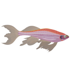 Pink zebra danio aquarium fish vector