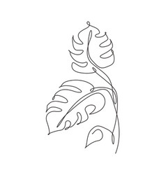 single continuous line drawing tropical monstera vector image