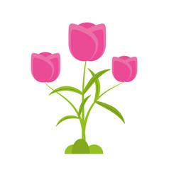 tulip flower romantic plant vector image vector image