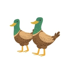 Two Male Ducks Walking vector image