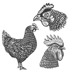 set chickens in engraving style rooster vector image