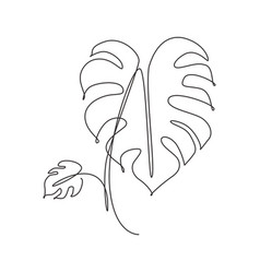 single continuous line drawing minimal monstera vector image